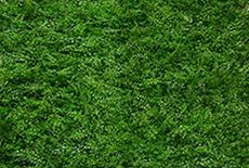 photobooth greenwall